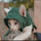 Assassins Creed Unity Kitten – Niedliches Fanvideo mit Babykatzen!